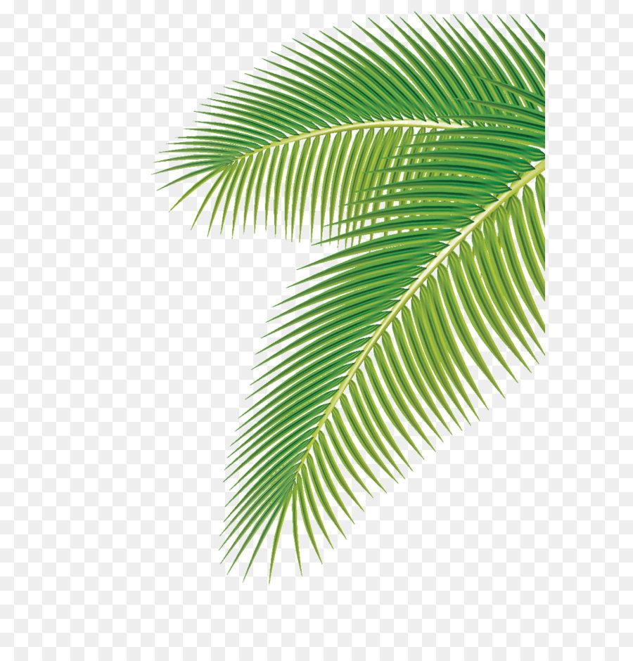 arecaceae leaf euclidean vector clip art palm leaf png download rh kisspng com Single Palm Leaf Clip Art Palm Leaf Clip Art Printable