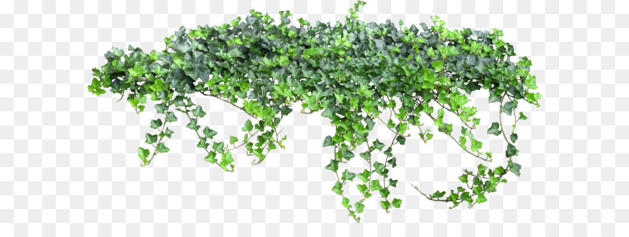 Texture Vine Ivy Fairy Tale 1679 827 Transprent Png Free