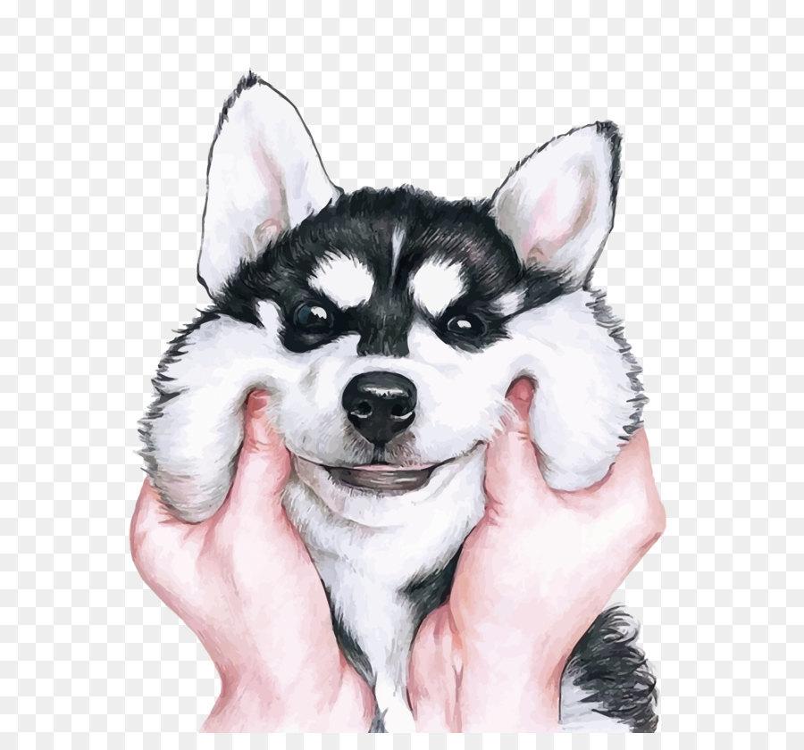 Siberian Husky Wallpaper - Husky vector png download - 1187*1500 - Free Transparent png Download.