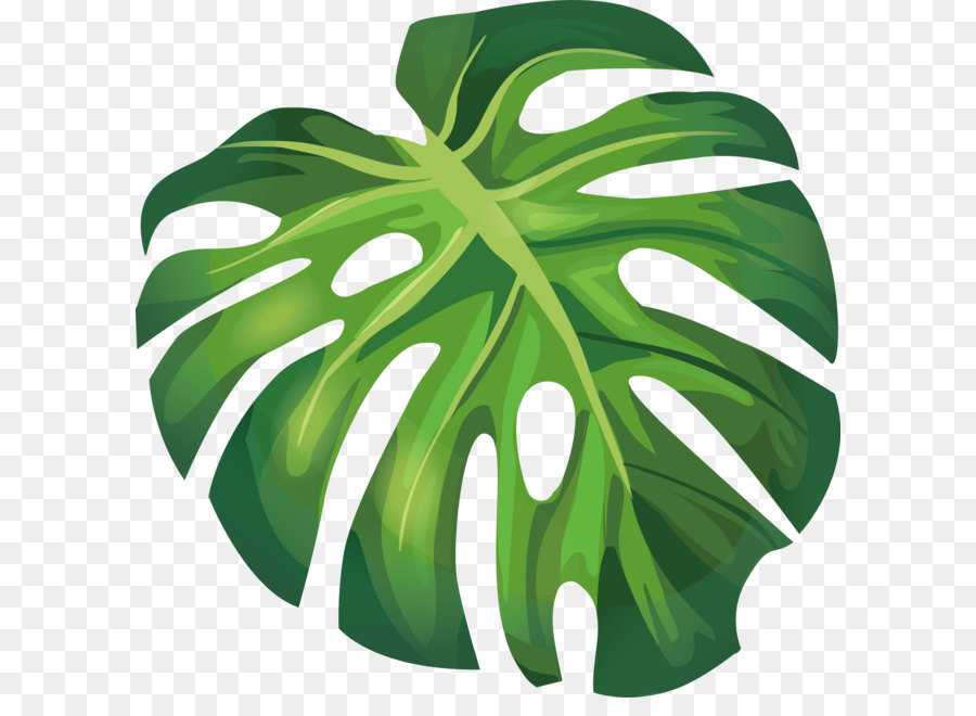 Leaf Arecaceae Euclidean Vector Illustration