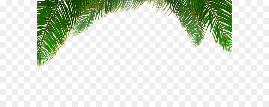Arecaceae Tree Euclidean Vector Leaf Vector Palm Tree