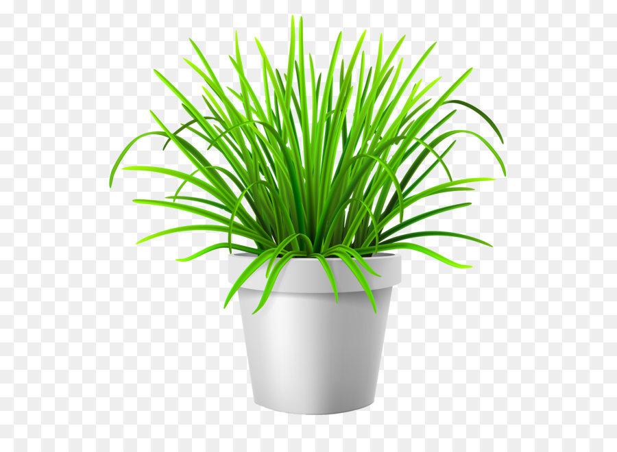 Flowerpot Lawn Vase Illustration Vector Grass Png Download 4000