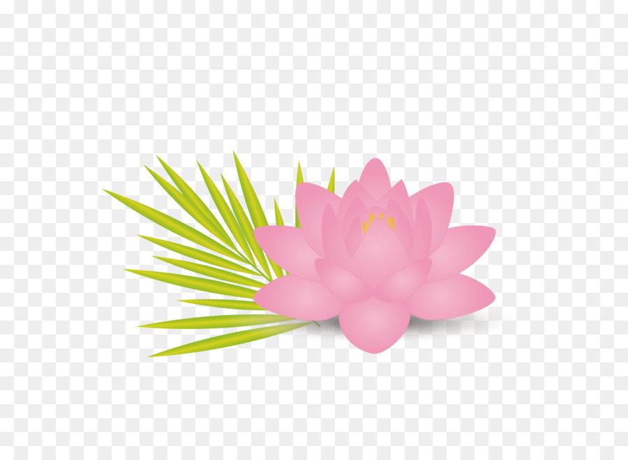 Nelumbo nucifera efecto de Loto la Flor de la Hoja Euclidiana del ...