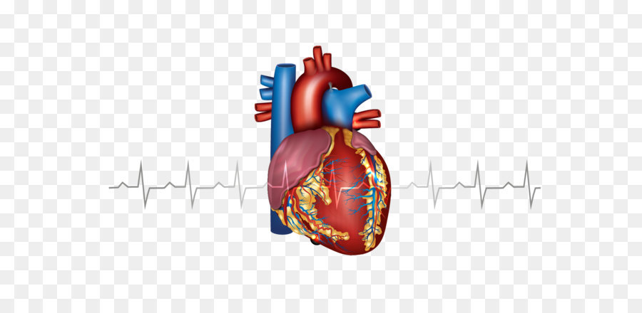 Myocardial infarction Heart Cardiovascular disease Artery - Creative ...