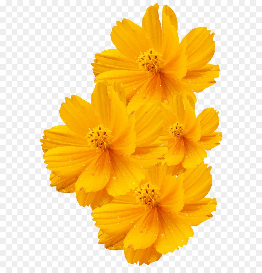 Cosmos Sulphureus Cosmos Bipinnatus Yellow Flower Euclidean Vector