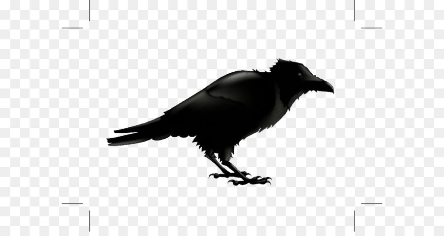 common raven silhouette stock photography illustration black rh kisspng com Crow Cartoon Bird Raven Bird Tattoo