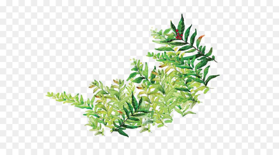Leaf Cartoon Comics Painted Green Leaves Png 1600 1200 Free Transpa