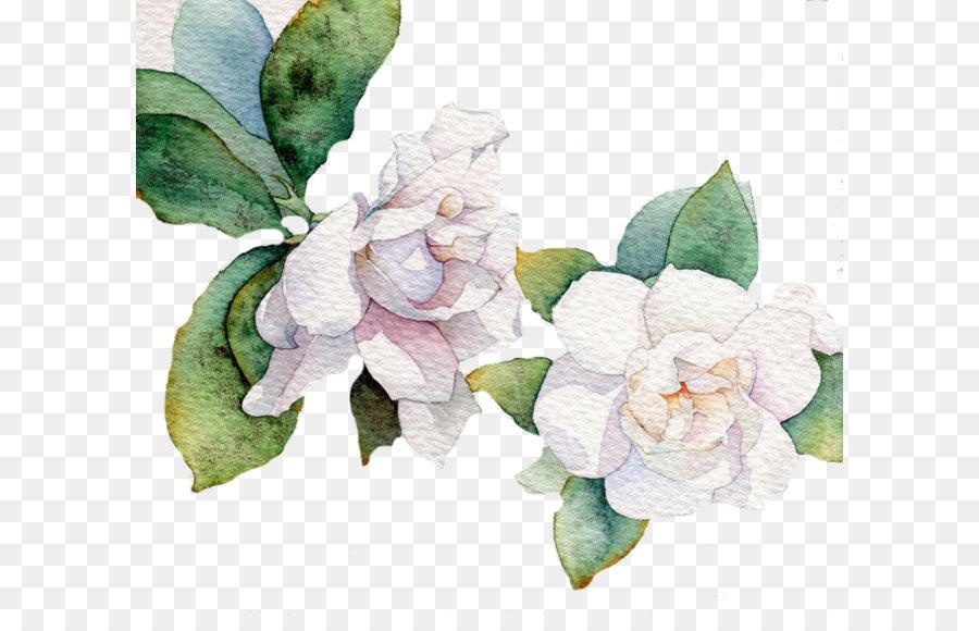 Flower white leaf euclidean vector white flower png download 658 flower white leaf euclidean vector white flower mightylinksfo