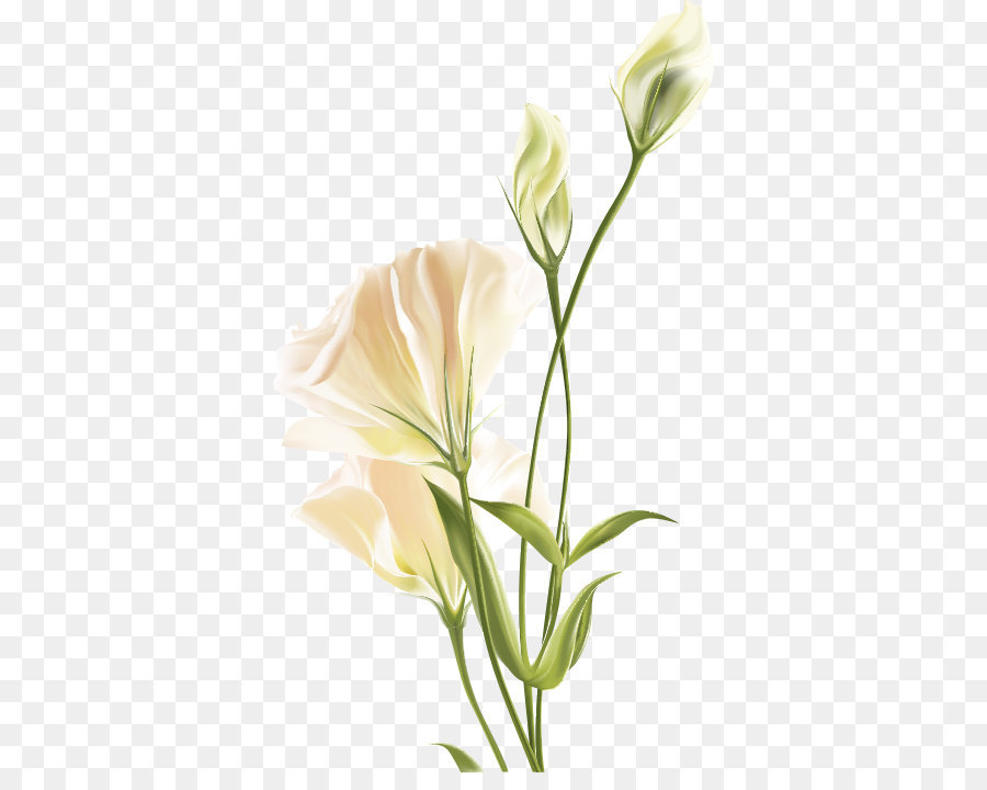 Flower euclidean vector white lily white flower png download 500 flower euclidean vector white lily white flower mightylinksfo
