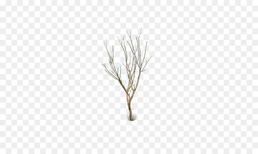 Hoja Del árbol De Tronco Creativo De Invierno Sin Hojas Marchitas
