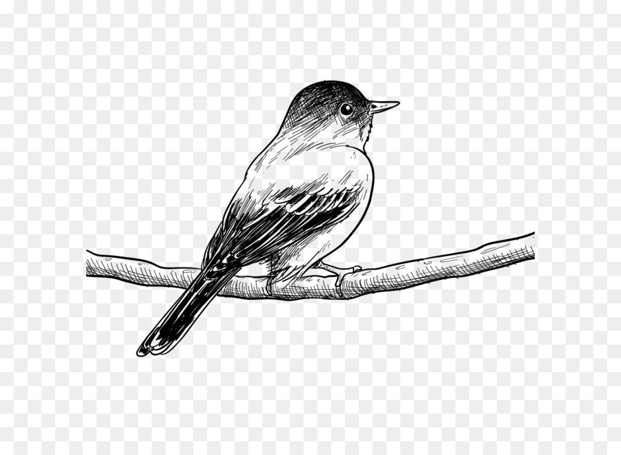 Bird Drawing Painting Poster Sketch - Vector birds wire png download ...