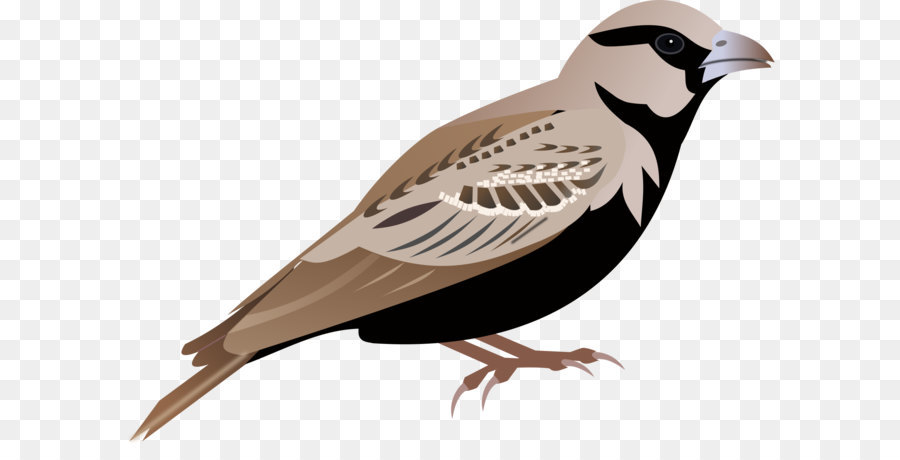lark sparrow clip art sparrow png png download 2000 1378 free rh kisspng com sparrow clipart free sparrow clipart black and white