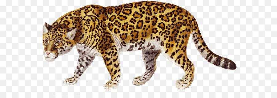 jaguar clip art jaguar png png download 1478 706 free rh kisspng com jaguar clip art free jaguar clip art images