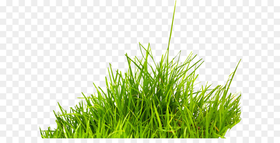 Green Grass Background png download - 1800*1232 - Free