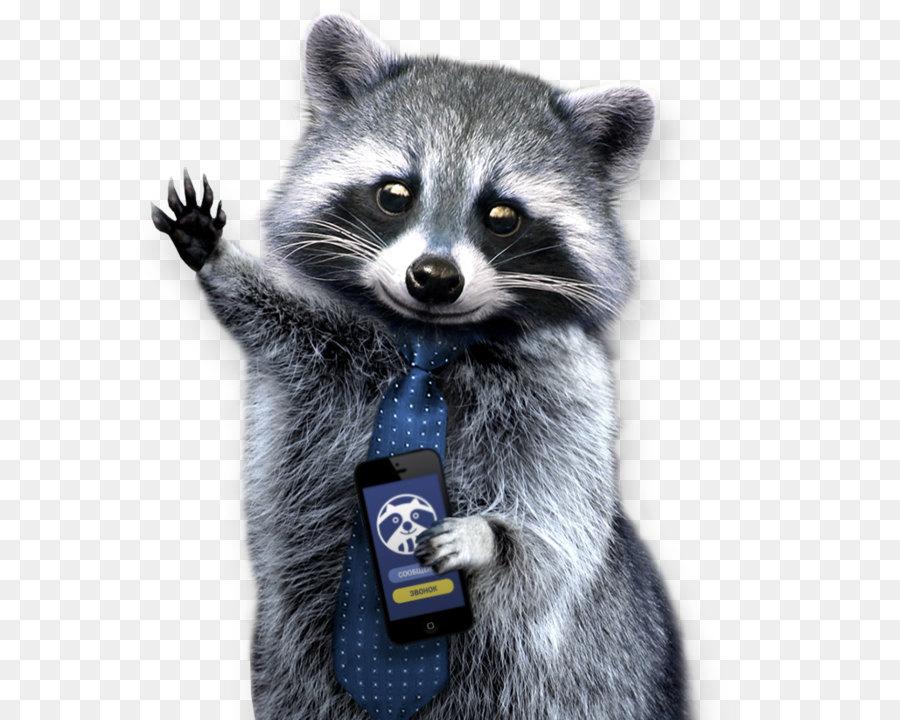 raccoons  a natural history clip art