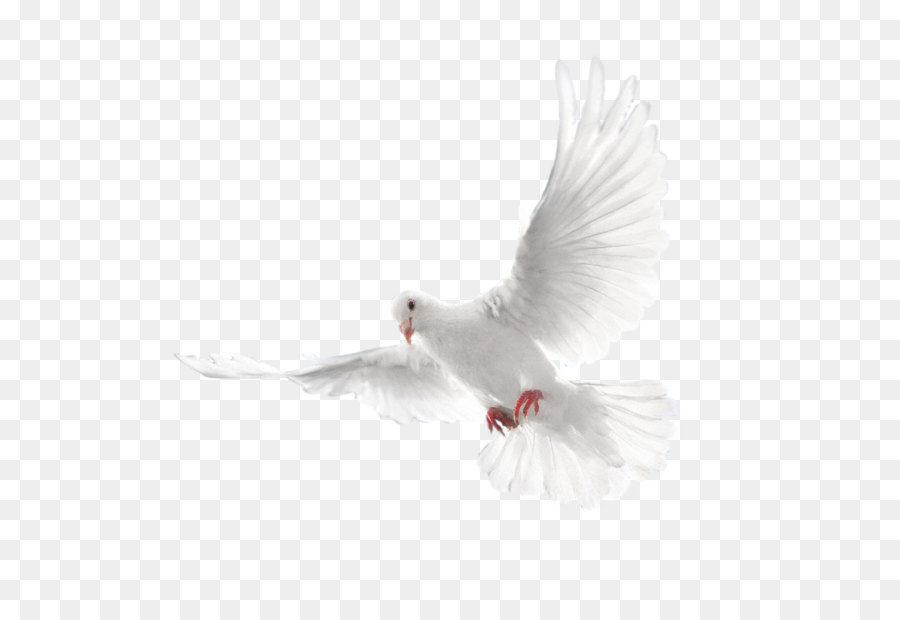 columbidae holy spirit doves as symbols white flying all saints day clip art all saints day clip art prayers