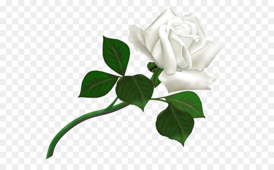Rose white clip art white rose png image flower white rose png rose white clip art white rose png image flower white rose png picture mightylinksfo