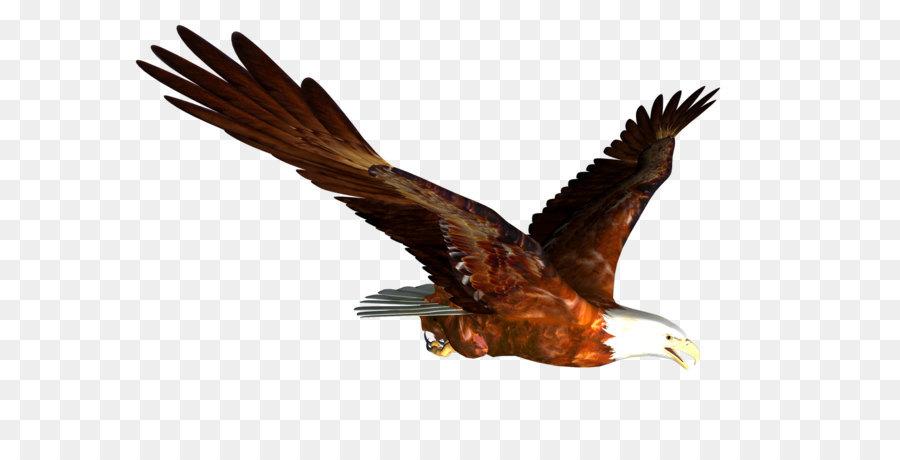 Hawk Mountain Sanctuary Accipitrinae Falconiformes Bird of prey ...