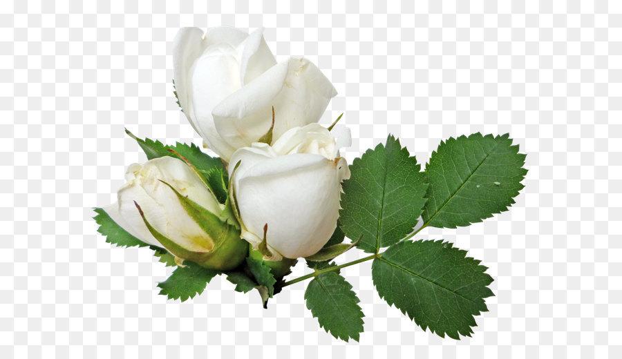 wedding ring columbidae engagement ring   white rose png