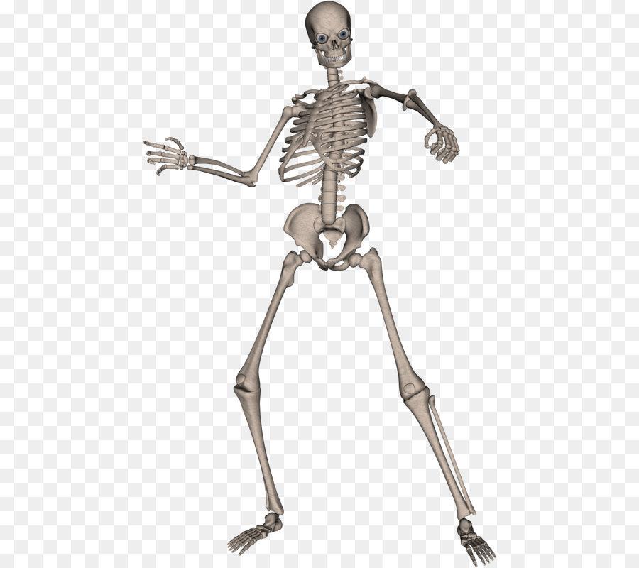 Skeleton Skull - Skeleton PNG image png download - 500*800 - Free ...