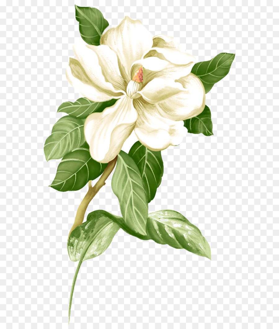 Painted white jasmine picture material png download 9991624 painted white jasmine picture material izmirmasajfo