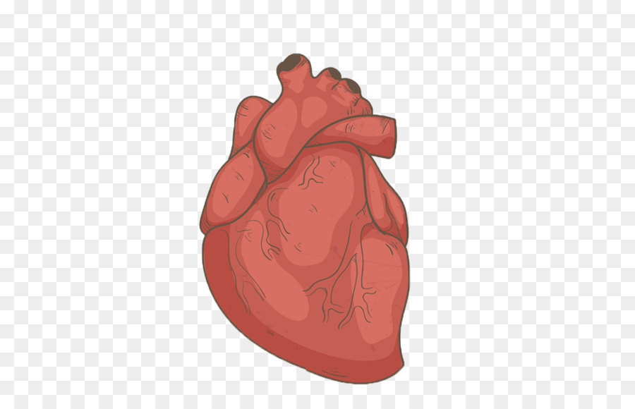Hand drawn human heart png download - 700*613 - Free Transparent ...