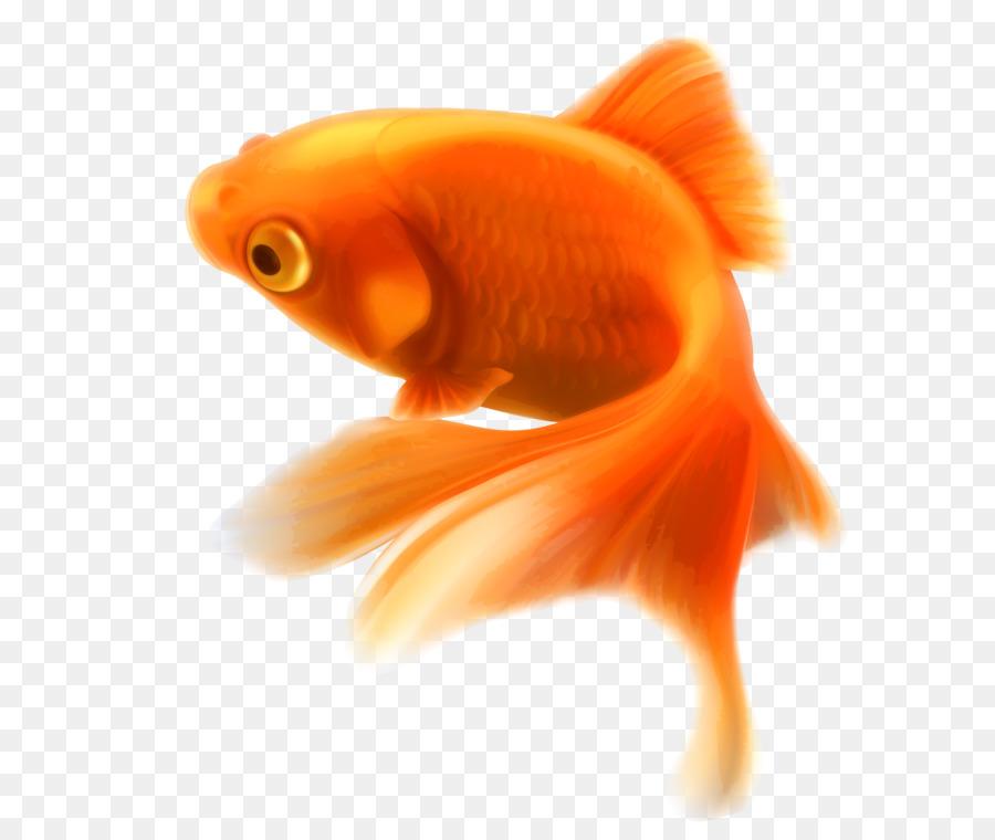 Goldfish Aquarium Tropical Fish Fish Png Png Download 2589 3000