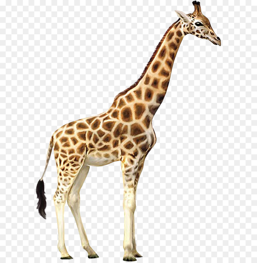 Giraffe Who Let The Kids Out Wall Decal Animal Wallpaper
