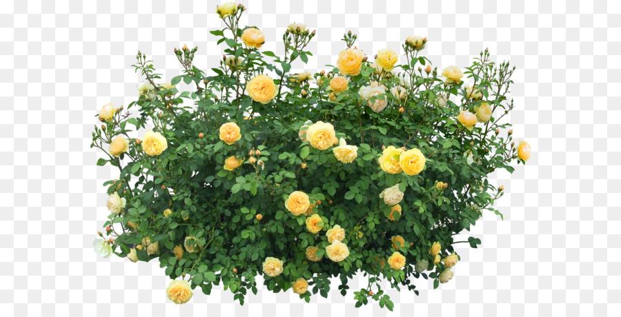 Shrub flower plant clip art bush png image png download 1600 shrub flower plant clip art bush png image mightylinksfo