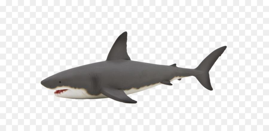 Great White Shark Shark Anatomy Whale Shark Isurus Oxyrinchus