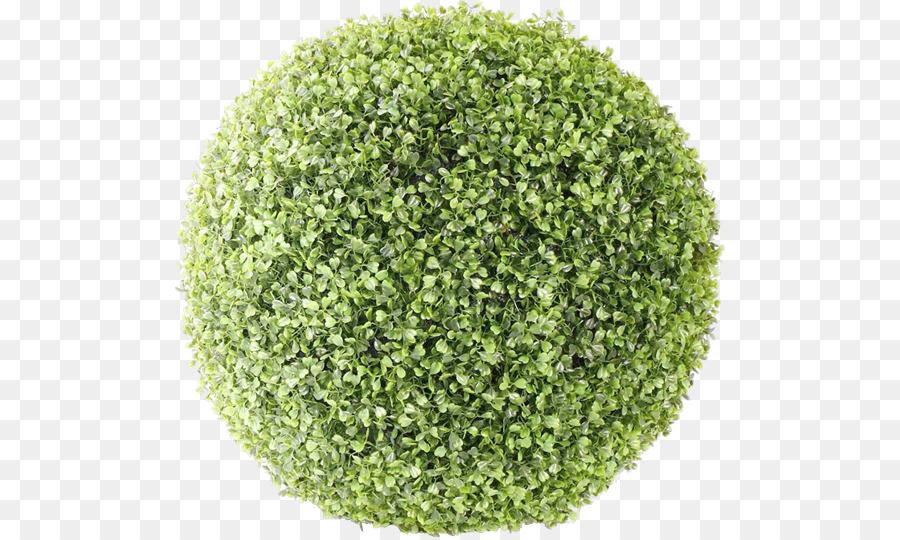 shrub tree bush png image png download 550537 free