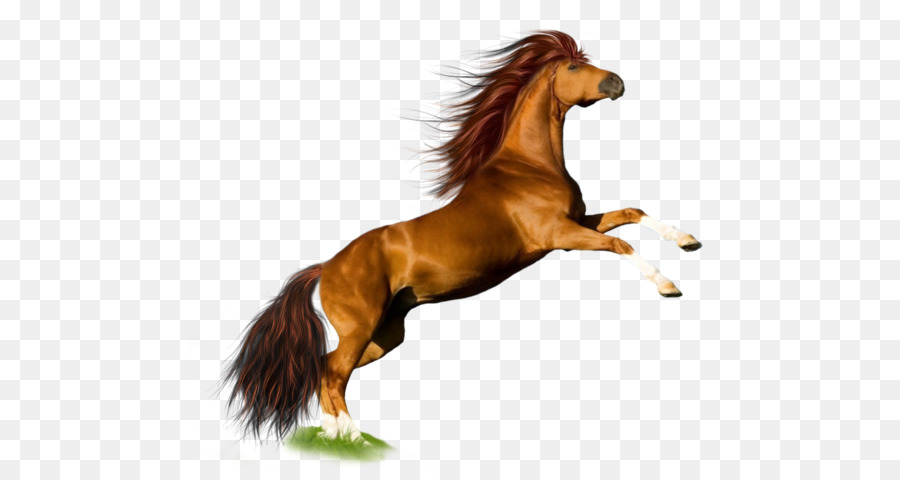 horse wallpaper horse png image free download picture