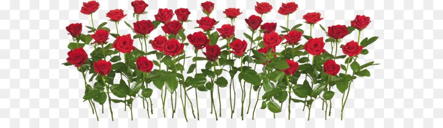 Rose Garden Flower Clip Art Rose Png Image Free Picture Download