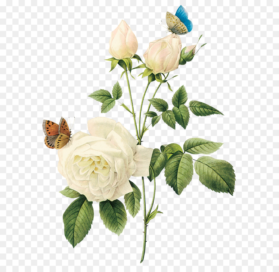 White Rose Png Image Flower White Rose Png Picture Png