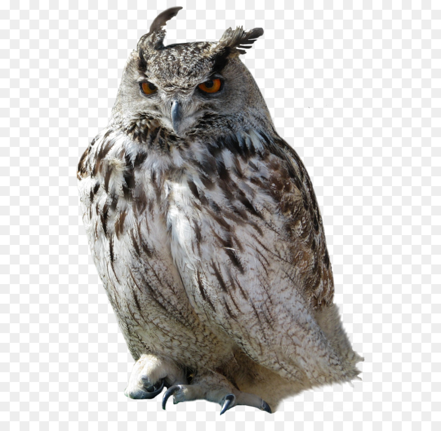 great horned owl clip art owl png png download 748 1000 free