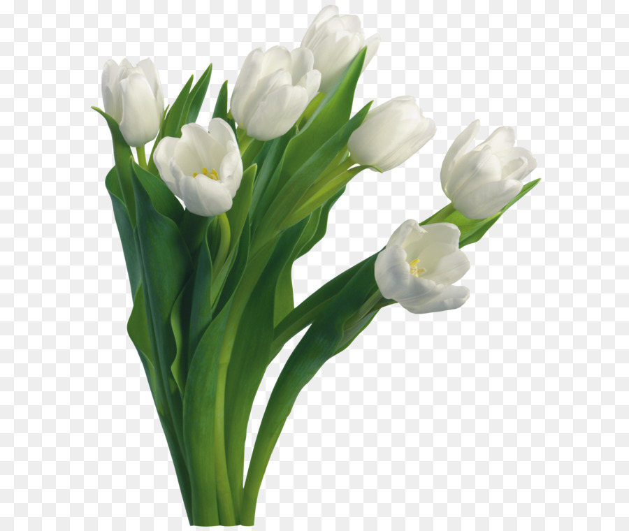 Medical workers day physician health care medicine health medical workers day physician health care medicine health professional bouquet flowers png mightylinksfo