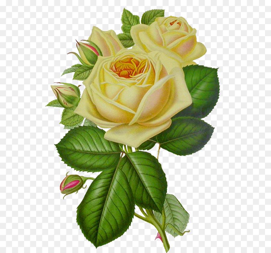 Rose Flower Clip Art White Rose Png Image Flower White Rose Png