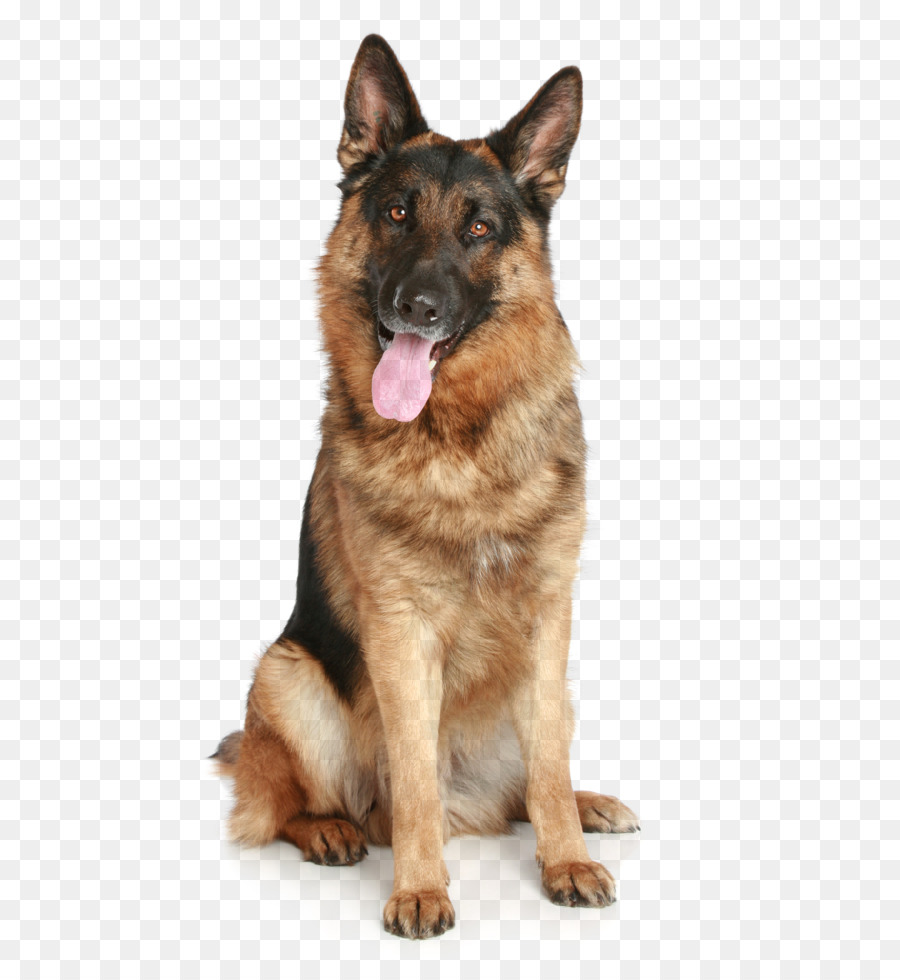 German Shepherd Puppy Pet Dog Png Image Png Download 16332449