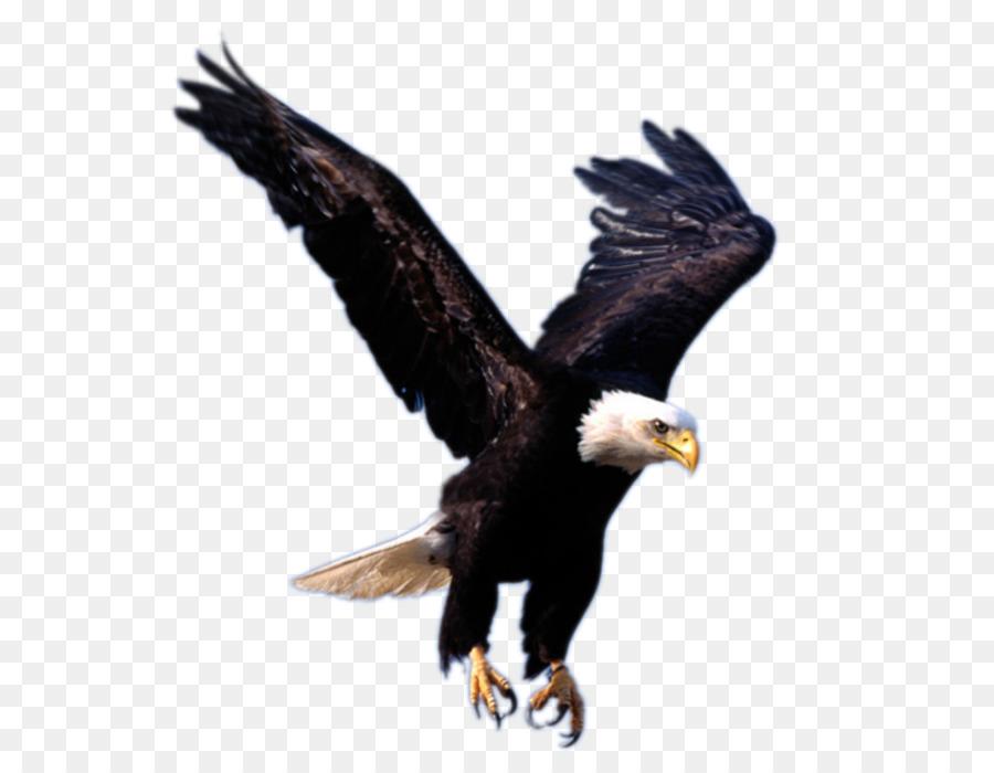 Eagle Clip art - flying eagle PNG image, free download png download ...