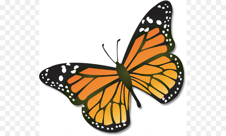 monarch butterfly insect caterpillar clip art butterfly clip art rh kisspng com blue monarch butterfly clipart monarch butterfly clipart transparent background
