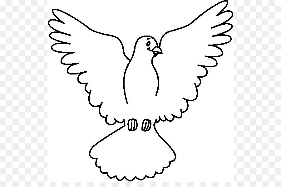 Columbidae Blanco, Clip art - Paloma Cliparts png dibujo ...