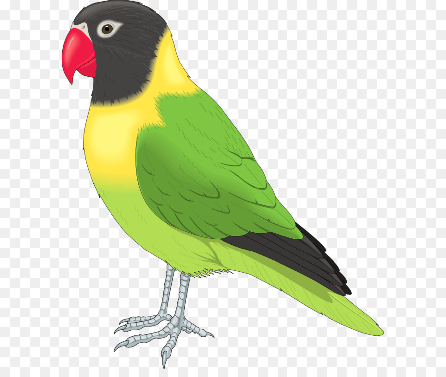 bird clip art flying birds clipart png download 700 800 free rh kisspng com Cartoon Parakeet Parakeet Border