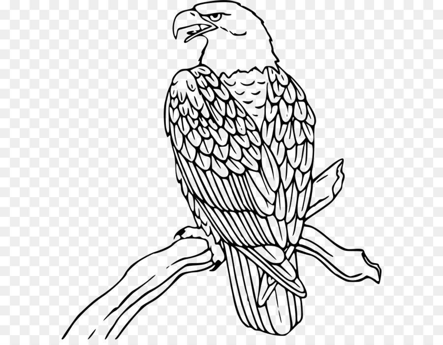 Águila calva Clip art - Libre Águila De Imágenes Prediseñadas png ...