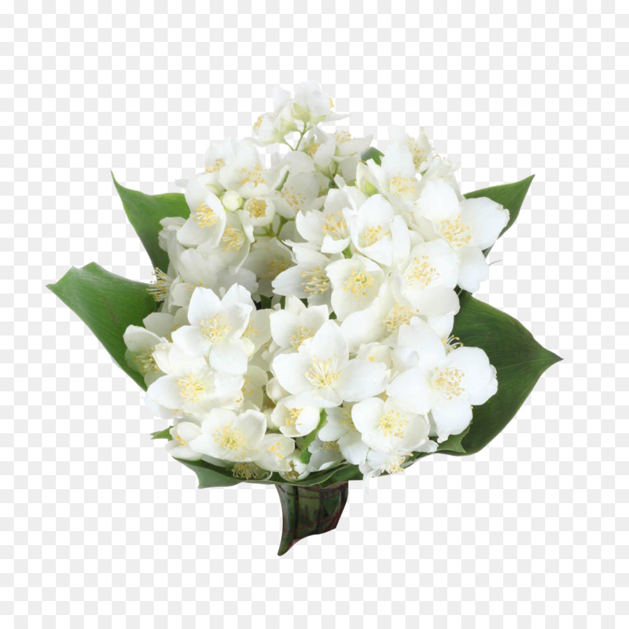 Arabian Jasmine Flower Photography Clip Art