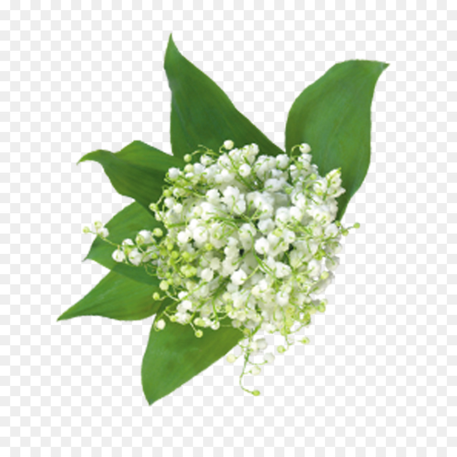 Gypsophila paniculata flower bouquet floral design babys breath gypsophila paniculata flower bouquet floral design babys breath flowers izmirmasajfo