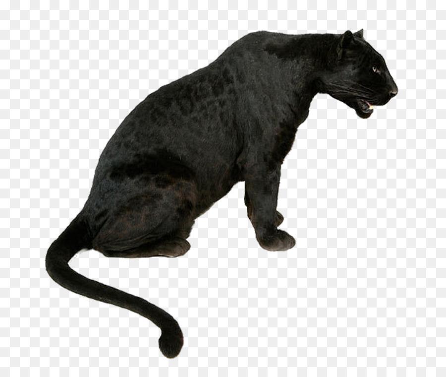 Leopard Tiger Jaguar Black Panther Lion Leopard Png