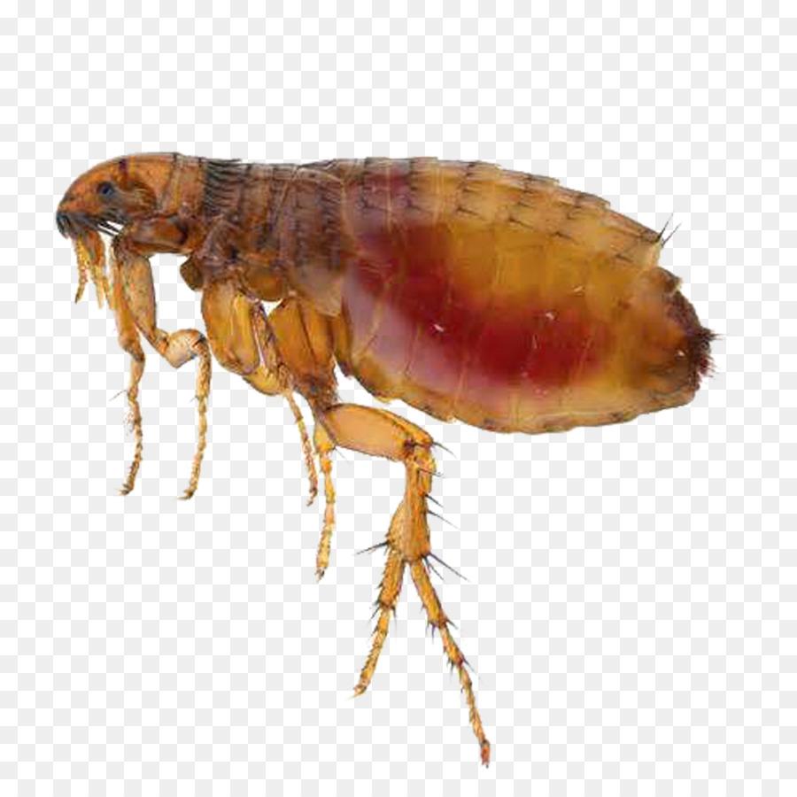 Picaduras de pulgas en humanos fotos 85