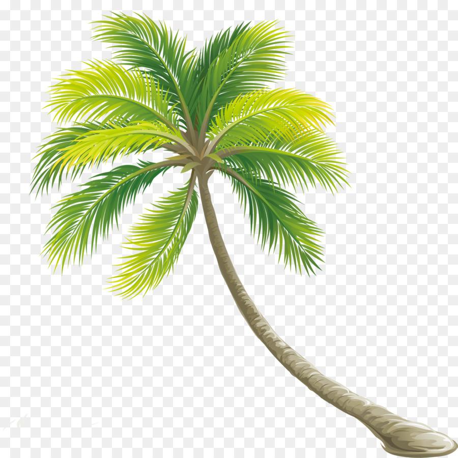 Tree Color Shrub - Palm tree png download - 1417*1417 - Free ...