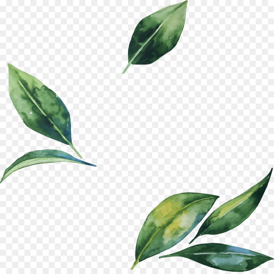 leaf flower illustration hand painted watercolor leaves png