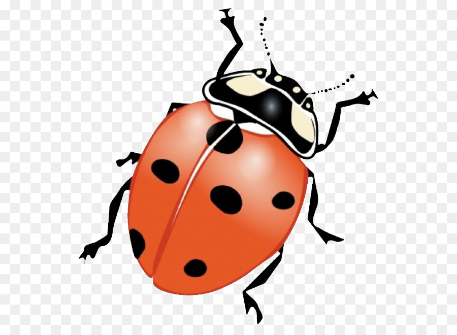 Insect Clip Art   Ladybug